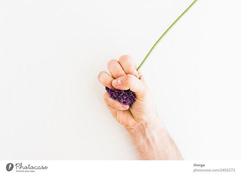 Mensch Natur Pflanze schön weiß Hand Blume Liebe natürlich Garten Feste & Feiern elegant Wachstum frisch Finger Kräuter & Gewürze