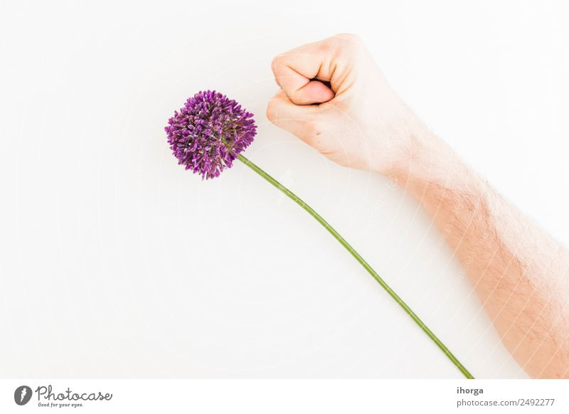 Allium isoliert auf weißem Hintergrund Gemüse Kräuter & Gewürze elegant Sommer Garten Feste & Feiern Valentinstag Muttertag Mensch Hand Finger Natur Pflanze