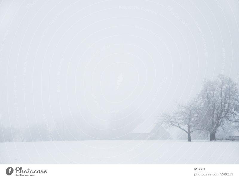 Ein Hoch auf die kalte Jahreszeit - Winternebel Natur Landschaft schlechtes Wetter Nebel Eis Frost Schnee Baum Park Wiese trist trüb Dorf Schneelandschaft