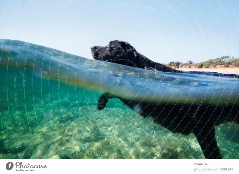 Meerestier Hund Natur Wasser Meer Freude Tier schwarz Erholung Bewegung Glück Schwimmen & Baden laufen natürlich außergewöhnlich authentisch niedlich
