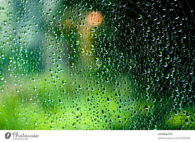 Regentropfen Natur Wasser Pflanze Umwelt Landschaft Gefühle Garten Park Wassertropfen Klima schlechtes Wetter Klimawandel Schöneberg