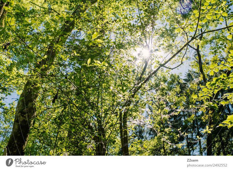 Sommer | Sonne | Wald Natur grün Landschaft Baum Wärme Umwelt natürlich leuchten frisch Idylle Schönes Wetter Energie Warmherzigkeit