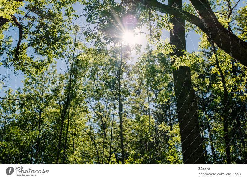 Sonne | Sommer | Wald Ausflug Umwelt Natur Landschaft Sonnenlicht Klima Klimawandel Wetter Schönes Wetter Baum Sträucher glänzend leuchten frisch natürlich