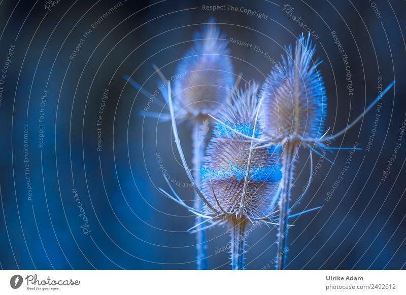 Disteln in Blau - Natur Design Wellness harmonisch Wohlgefühl Erholung ruhig Meditation Massage Schwimmbad Dekoration & Verzierung Tapete Trauerkarte
