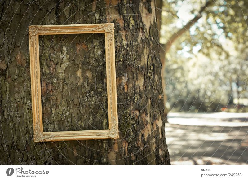 Baumbild Park hängen außergewöhnlich lustig Bilderrahmen Baumstamm Königlich edel Rahmen leer Baumrinde vergessen gold verloren Farbfoto Gedeckte Farben
