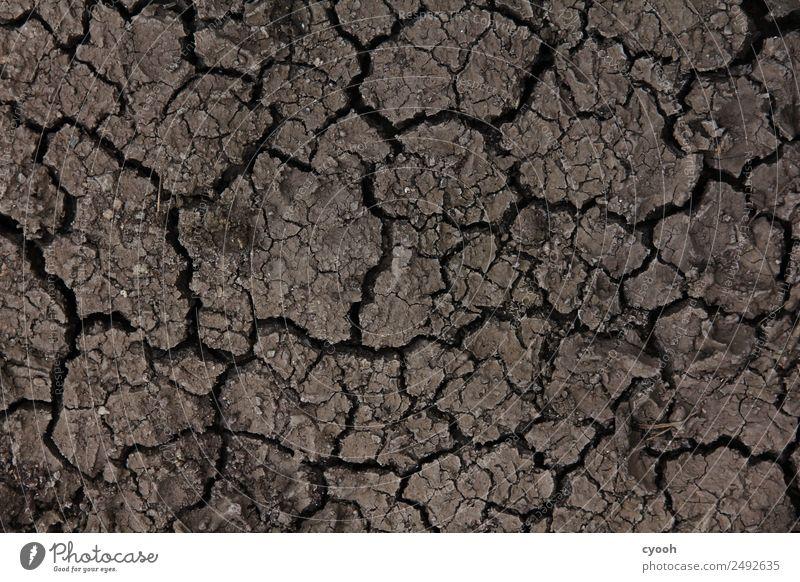 Klimawandel zum anfassen Sommer Zeit braun Angst Erde Zukunft Vergänglichkeit bedrohlich trocken heiß Verfall Appetit & Hunger Riss nachhaltig Verzweiflung