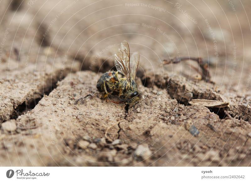 Zukunft? Erde Totes Tier Biene Sorge Trauer Tod Appetit & Hunger Durst schuldig Scham Angst gefährlich bedrohlich Risiko Wut Zeit Zerstörung Bienensterben