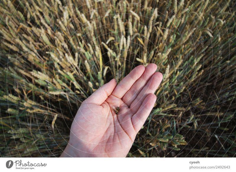 Unsere Zukunft in unseren Händen 2 Hand Feld Biene Krankheit Wut Traurigkeit Sorge Appetit & Hunger Schmerz schuldig Scham Angst gefährlich bedrohlich