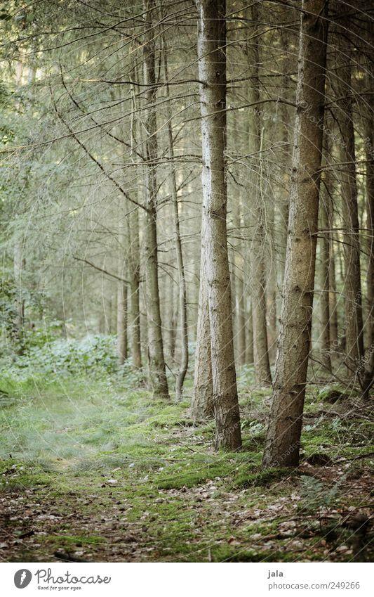 wald Umwelt Natur Pflanze Baum Sträucher Moos Blatt Grünpflanze Wildpflanze Wald natürlich wild Farbfoto Außenaufnahme Menschenleer Tag