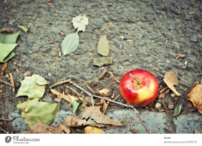 Jonagold grün rot Ernährung Herbst Wege & Pfade Lebensmittel Frucht liegen süß natürlich authentisch Apfel Freundlichkeit Ernte Gesunde Ernährung Paradies