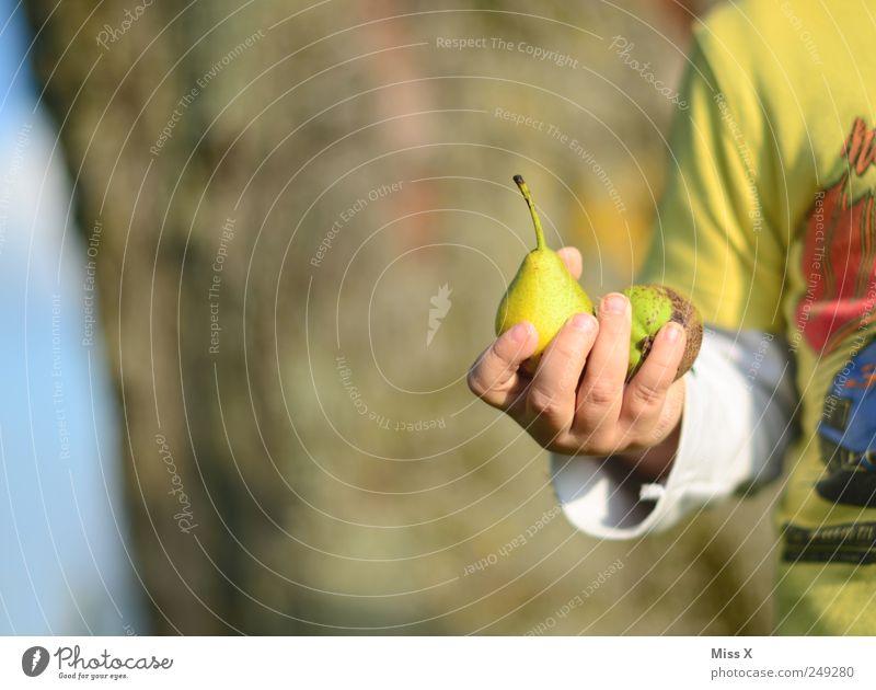 Birnendieb ! Lebensmittel Frucht Ernährung Bioprodukte Mensch Kind Kleinkind 1 1-3 Jahre 3-8 Jahre Kindheit klein lecker süß Ernte Birnbaum Kinderhand Farbfoto