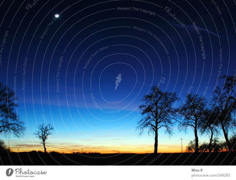 .... und Gute Nacht Natur Landschaft Wolkenloser Himmel Nachthimmel Horizont Sonnenaufgang Sonnenuntergang Schönes Wetter Baum Wiese außergewöhnlich dunkel blau
