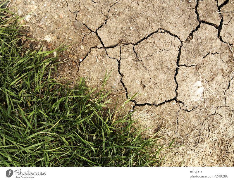 Autumn |Again Natur grün Wiese Gras braun Feld Erde Wüste trocken Grenze Riss Gegenteil Steppe