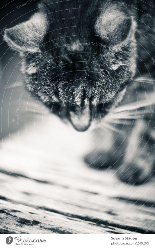 kraftlos. Katze alt Einsamkeit Tier Traurigkeit Garten Angst trist stehen sitzen Tisch Hilfsbereitschaft nah Haustier eng Hauskatze