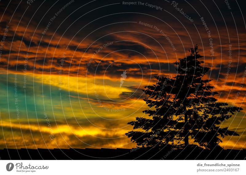 Sonnenuntergang über den Dächern der Stadt Natur Pflanze Luft Himmel Wolken Gewitterwolken Sonnenaufgang Sonnenlicht Sommer Schönes Wetter schlechtes Wetter