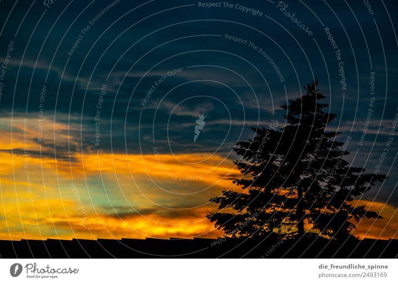 Dramatischer Sonnenuntergang Natur Landschaft Pflanze Himmel Wolken Gewitterwolken Sonnenaufgang Sonnenlicht Sommer Schönes Wetter schlechtes Wetter Baum