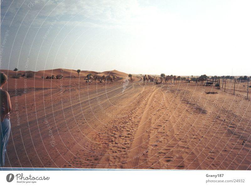 Auf der Piste Gras Scheich heiß Physik fahren grün Ödland Ferien & Urlaub & Reisen Werbefachmann Plakat Panorama (Aussicht) Wüste Skipiste Autobahn strroute 66