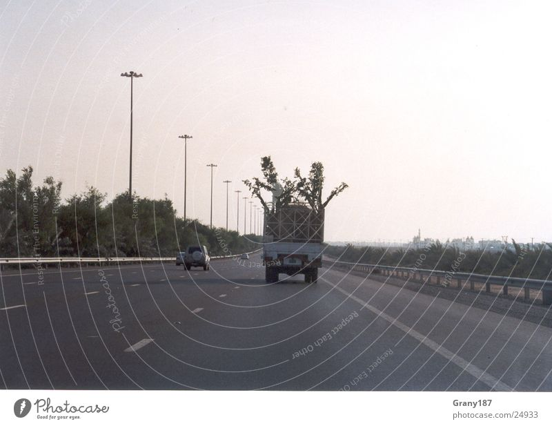 Baumdiebe Ferien & Urlaub & Reisen groß Lastwagen Autobahn Palme Plakat Werbefachmann