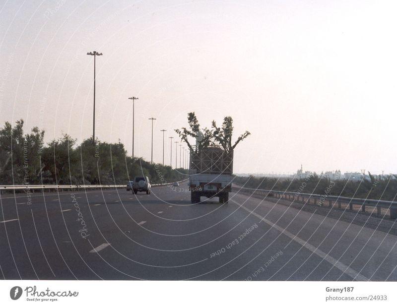 Baumdiebe Lastwagen Autobahn Palme Werbefachmann Plakat Panorama (Aussicht) Ferien & Urlaub & Reisen emirate werbemittel plakatwerbung fernsehn groß