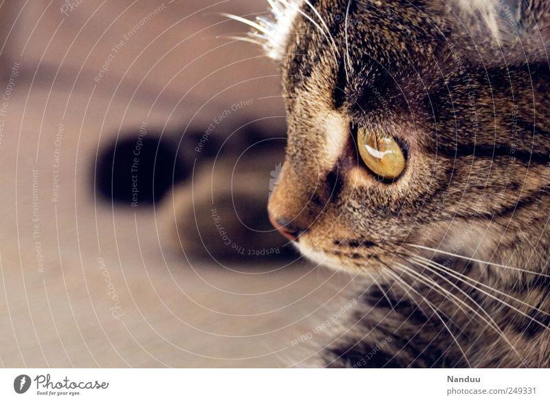 Miezekatze Tier Katze liegen niedlich nachdenklich Haustier