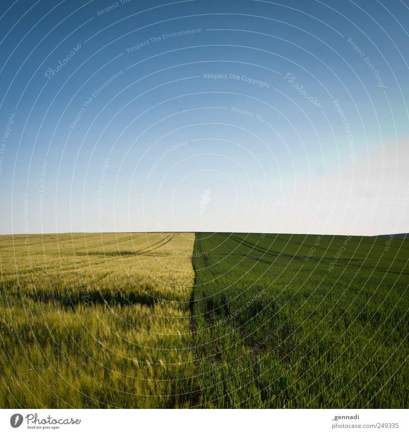Gerecht teilen will gelernt sein. Himmel Natur blau Pflanze Sommer ruhig Einsamkeit gelb Umwelt Landschaft Gras Erde Linie Feld Horizont