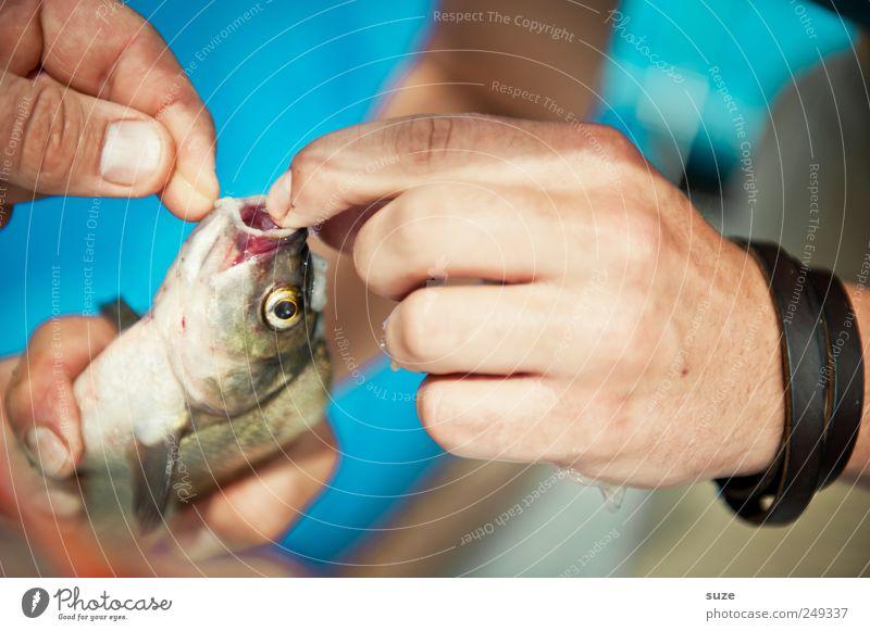 Fangfrisch Fisch Freizeit & Hobby Angeln Hand Finger Tier Wildtier 1 festhalten blau Angler Angelschnur Fischereiwirtschaft Fischmaul befreien Farbfoto