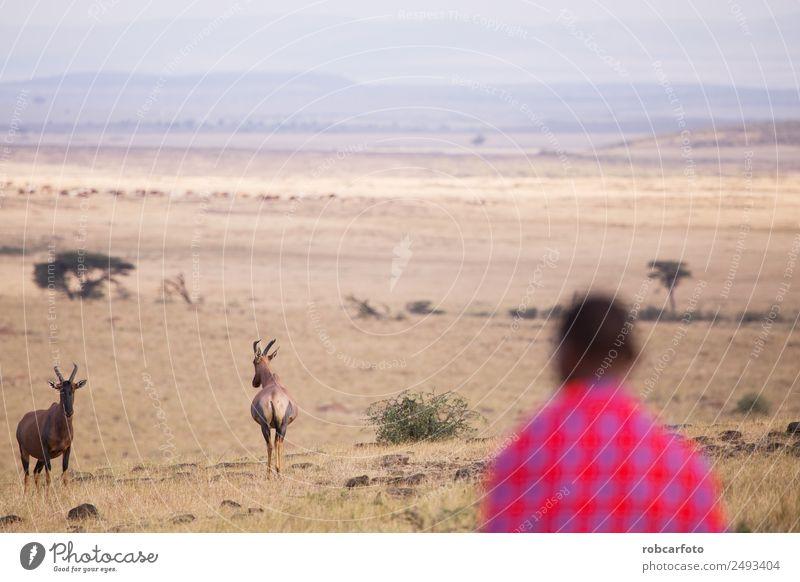 Maasai wandern in der Savanne bei Sonnenuntergang Lifestyle schön Ferien & Urlaub & Reisen Sommer Mensch Frau Erwachsene Mann Natur Landschaft Baum Gras Dorf