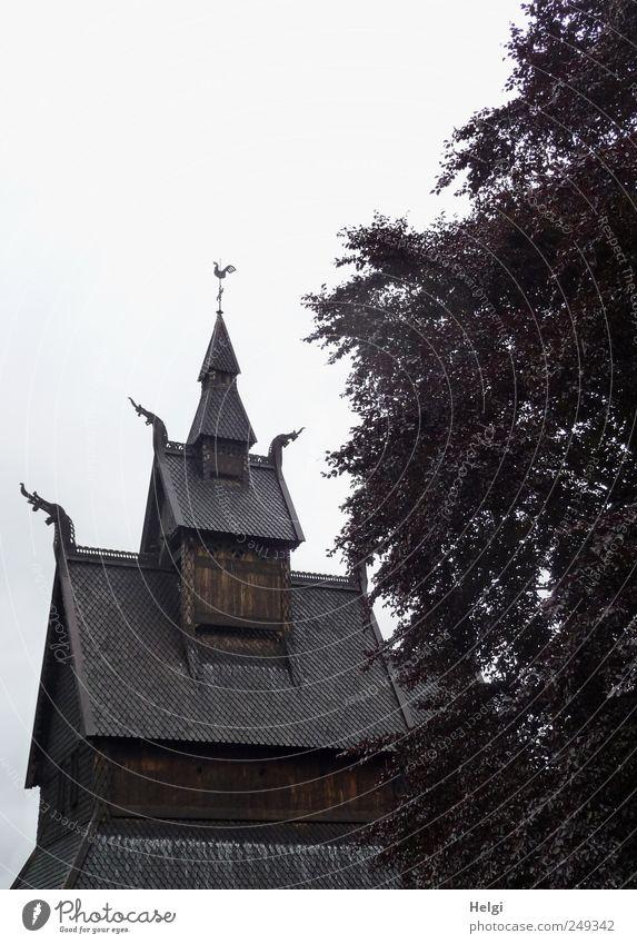 historisch... weiß Baum Pflanze Ferien & Urlaub & Reisen Blatt dunkel Architektur Kunst braun Tourismus ästhetisch stehen Kirche einzigartig Dach Kultur