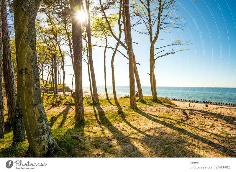 Ostseestrand in Polen Strand Natur Blume Küste Tourismus Dünen Orzechowo Bäume Gegenlicht Sonne Himmel blau Ferien & Urlaub & Reisen Naturschutzgebiet leer