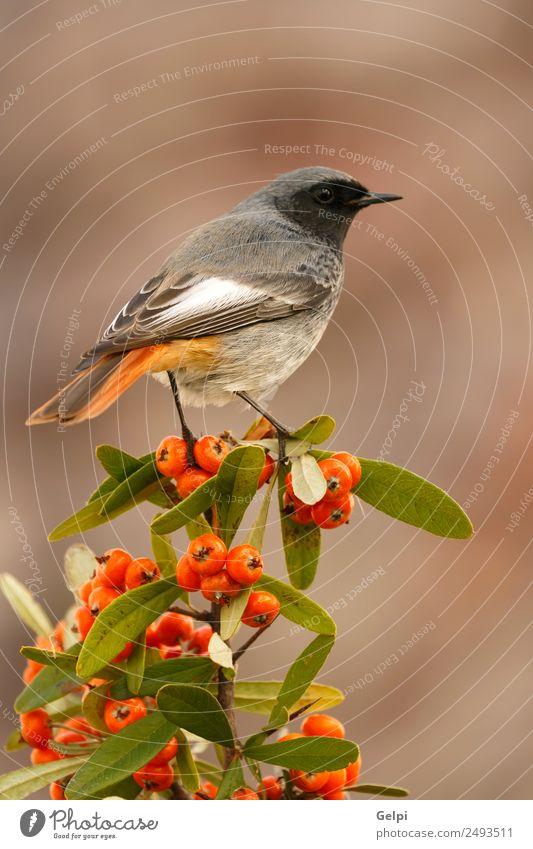 Natur Mann schön weiß Tier dunkel schwarz Erwachsene Leben Umwelt Herbst natürlich klein Vogel braun wild