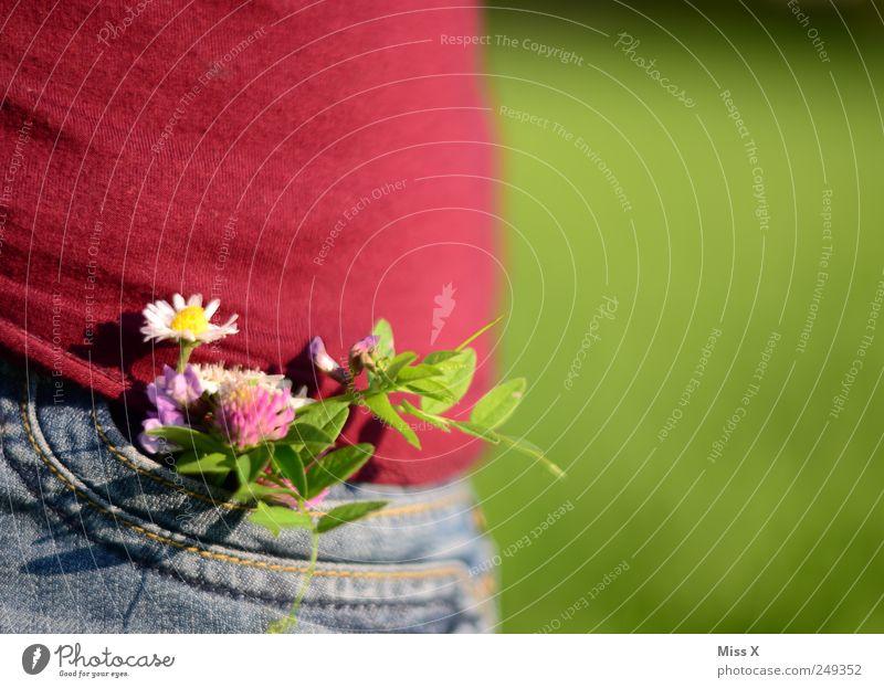 Guten Morgen schöner Herbst II Pflanze Blume Sommer Blatt Wiese Blüte Frühling Stimmung Jeanshose Blühend Schmuck Blumenstrauß Duft Gänseblümchen Accessoire Klee