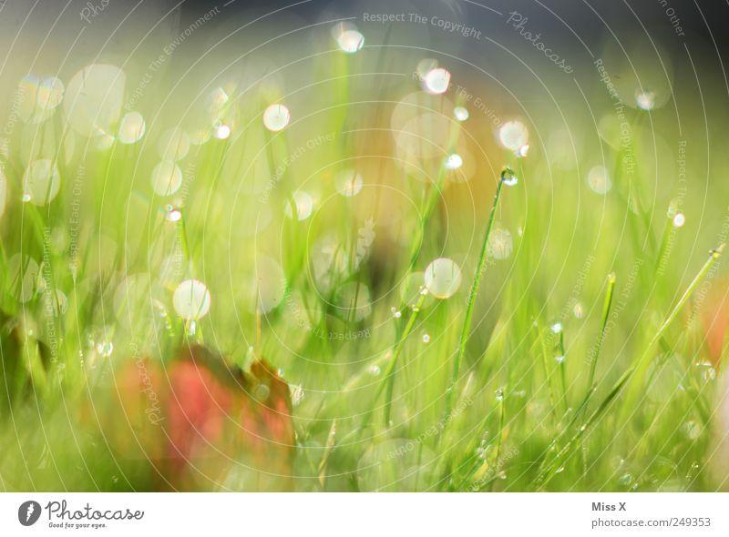 Tau Wassertropfen Gras Blatt Wiese nass grün herbstlich Farbfoto mehrfarbig Außenaufnahme Nahaufnahme Menschenleer Morgen Morgendämmerung Reflexion & Spiegelung