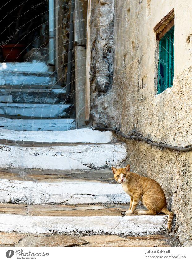 Wer bist du denn? alt blau weiß schön Ferien & Urlaub & Reisen ruhig gelb Stein Katze Treppe Tiergesicht weich Neugier Fell historisch Wachsamkeit