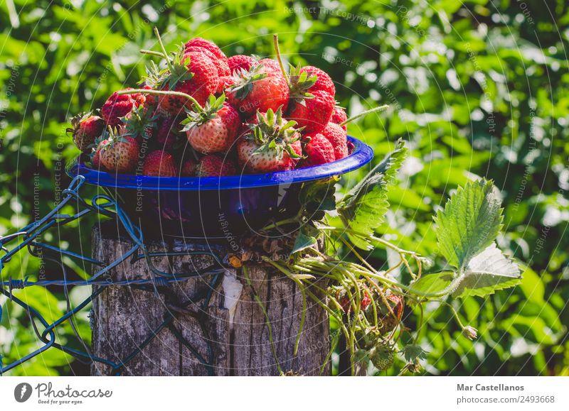 Natur blau Pflanze schön Farbe grün rot Blatt Essen Lifestyle natürlich Frucht Ernährung glänzend frisch Fotografie