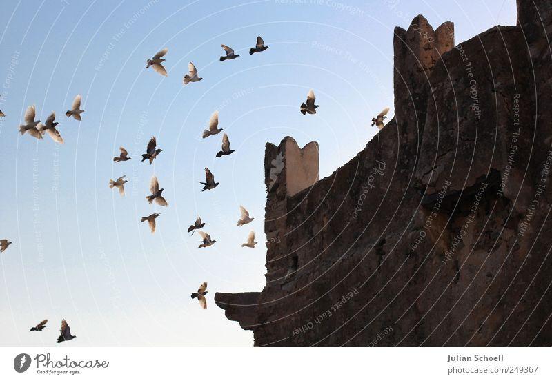 Zuflucht blau Freiheit Bewegung Stein Vogel fliegen ästhetisch Wildtier Tiergruppe außergewöhnlich leuchten Schutz historisch Zusammenhalt Schüchternheit