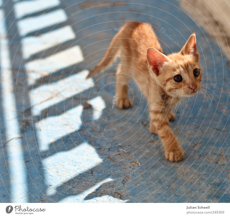 Auf leisen Pfoten Tier Katze 1 beobachten hören Blick klein blau Wachsamkeit Neugier Leichtigkeit Farbfoto Außenaufnahme Tag Licht Schatten Sonnenlicht