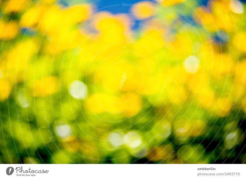 Echinacea Blume Blüte Blühend Sommer Farbe Roter Sonnenhut Korbblütengewächs gelb Garten Pflanze Unschärfe Hintergrundbild strahlend leuchten