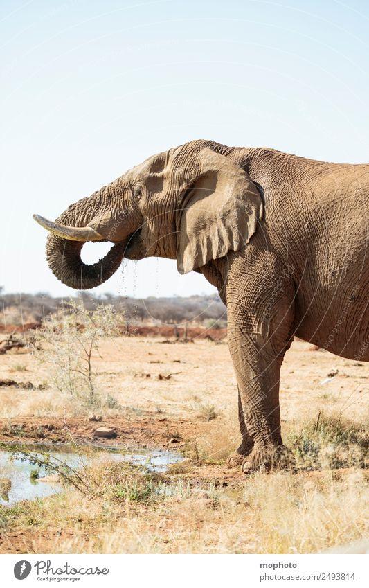 Abkühlung #2 Ferien & Urlaub & Reisen Tourismus Safari Natur Pflanze Wasser Wolkenloser Himmel Klima Klimawandel Schönes Wetter Wärme Dürre Teich Wüste Namibia