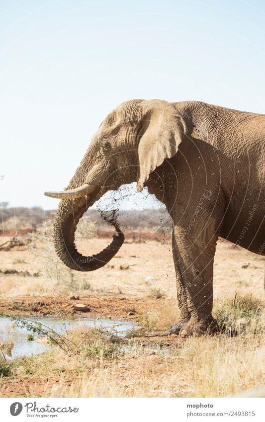 Abkühlung #1 Ferien & Urlaub & Reisen Tourismus Safari Sonne Natur Pflanze Wasser Wassertropfen Wolkenloser Himmel Wärme Dürre Wüste Namibia Afrika Menschenleer