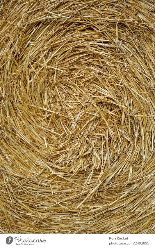#S# Strohspirale Natur Klima blond Landwirtschaft Wärme Verwirbelung Wasserwirbel Feld Strohballen Getreide Kreativität gelb gold viele Muster drehen Ernte