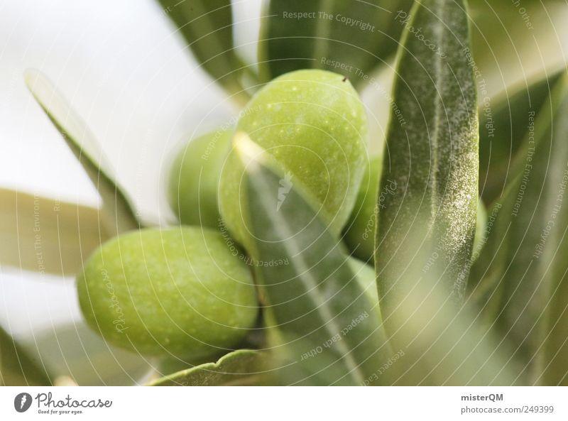 olivos maximus. grün Sommer Blatt Lebensmittel Gesundheit ästhetisch rein Italien reif Gesunde Ernährung harmonisch ökologisch mediterran dezent Oliven