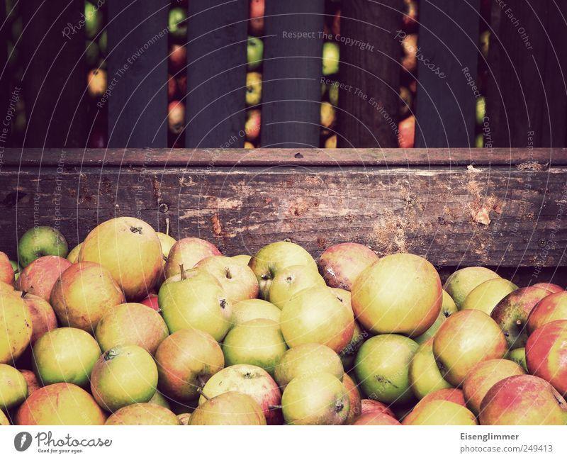 Apfelernte Natur Garten Gesundheit Frucht Apfel Landwirtschaft Ernte komplex Lagerplatz Holzkiste