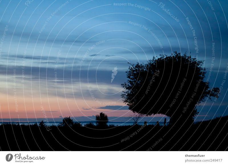 die blaue Stunde Himmel schön Baum rot Sommer Meer ruhig schwarz Ferne Farbe Freiheit Küste Stimmung rosa Horizont