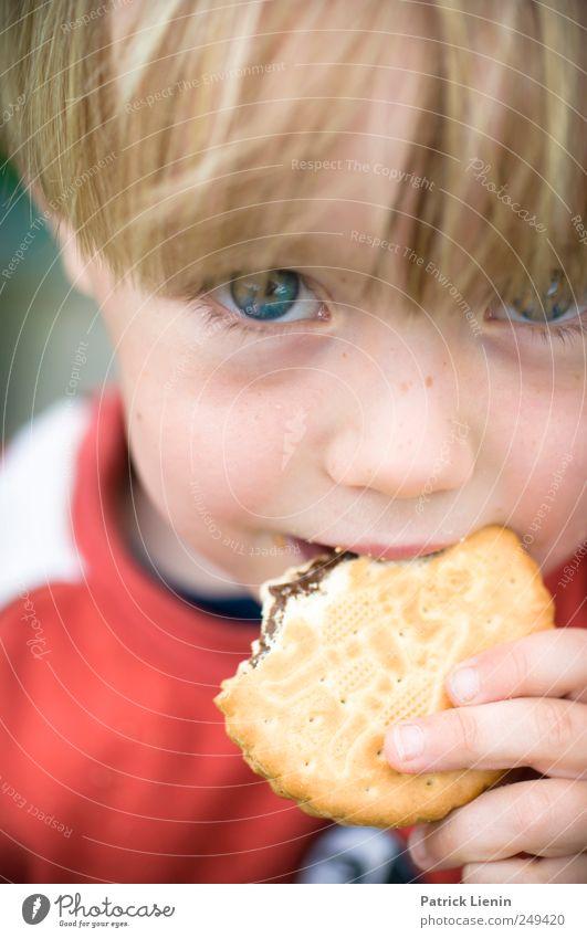 Totally awesome Mensch Kind blau schön Freiheit Kopf Essen Kindheit Lebensmittel maskulin beobachten Süßwaren 8-13 Jahre Schokolade frech Sommersprossen