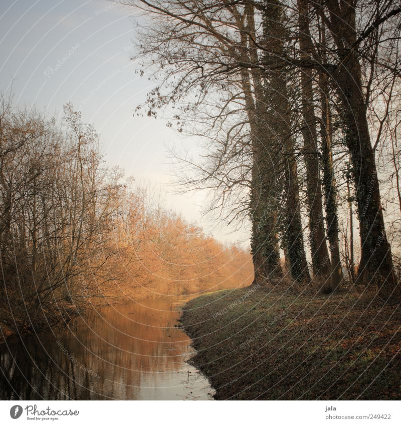 frühjahr Himmel Natur Baum Pflanze Umwelt Landschaft Gras natürlich Sträucher Bach