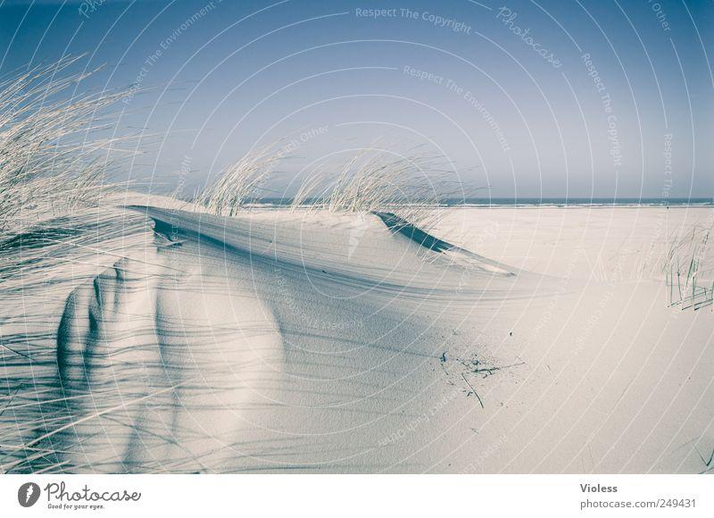 Spiekeroog   ....Soft Landschaft Sand Himmel Küste Strand Insel entdecken Erholung Nordseeinsel Düne Dünengras Farbfoto Außenaufnahme Textfreiraum rechts Licht
