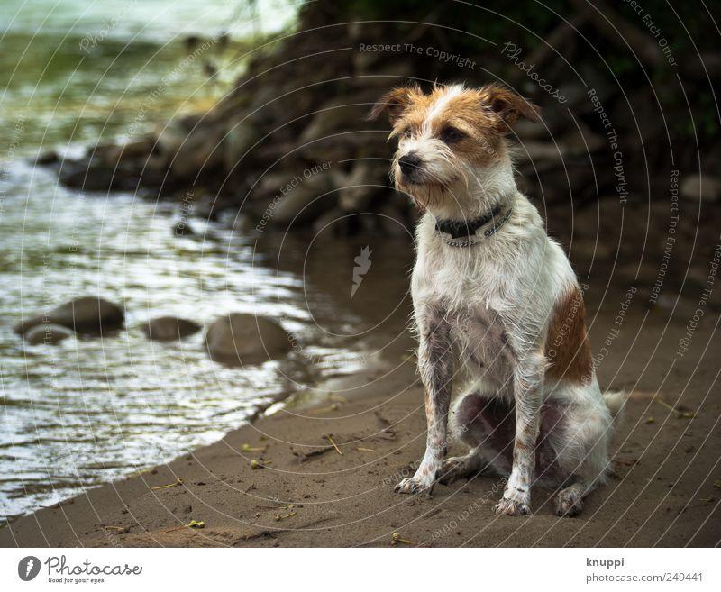 des Menschen bester Freund Strand Wellen Natur Wasser Sonnenlicht Schönes Wetter Flussufer Tier Haustier Hund Tiergesicht 1 Tierjunges sitzen warten Neugier