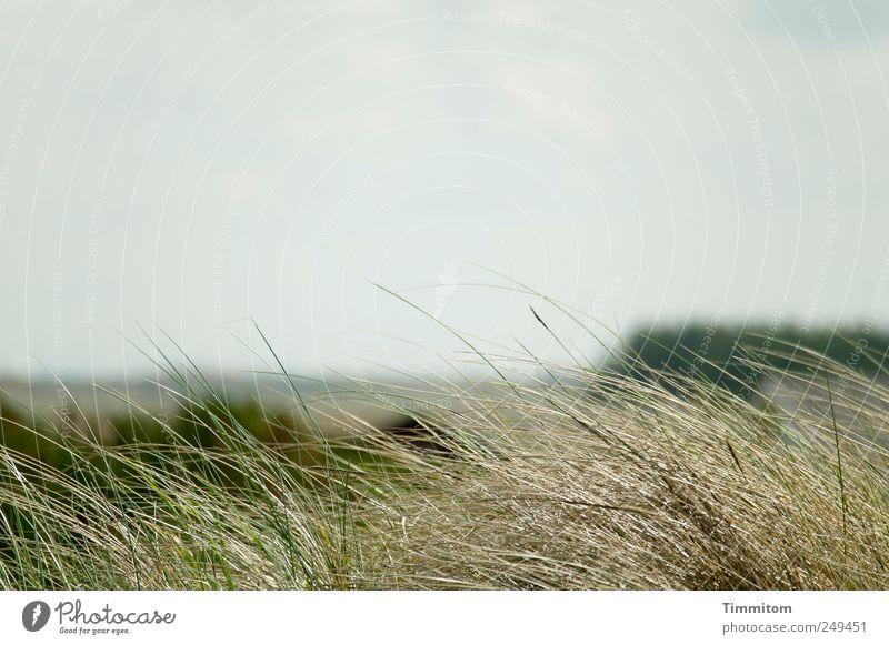Ruheland Natur Pflanze Sommer Ferien & Urlaub & Reisen Erholung Umwelt Gefühle Landschaft Gras Zufriedenheit Warmherzigkeit Nordsee Gelassenheit Weisheit Vorsicht verlieren