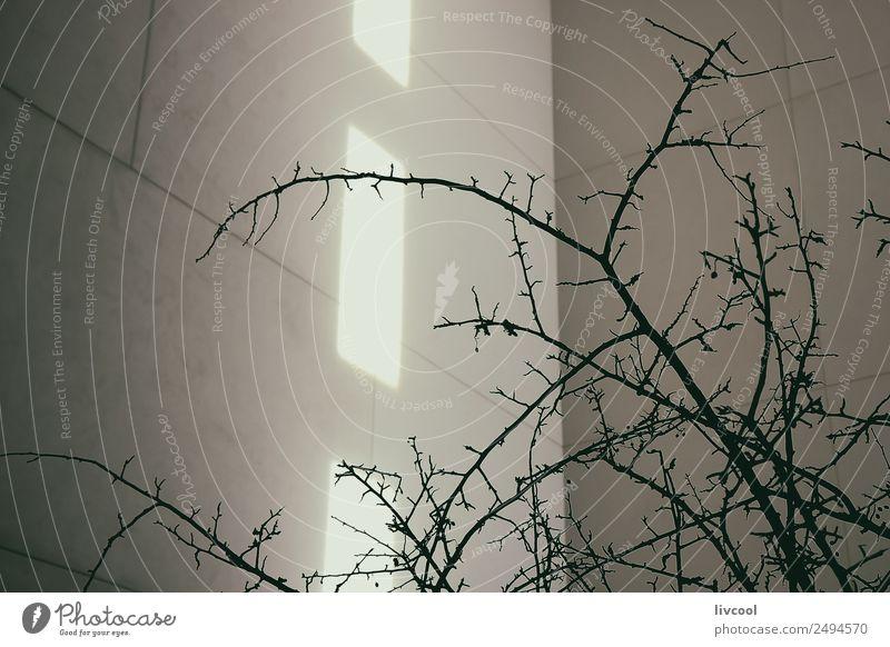 Himmel Stadt schön weiß Baum schwarz Architektur Religion & Glaube Gebäude Kunst Fassade Kirche einzigartig einfach Beton Spanien