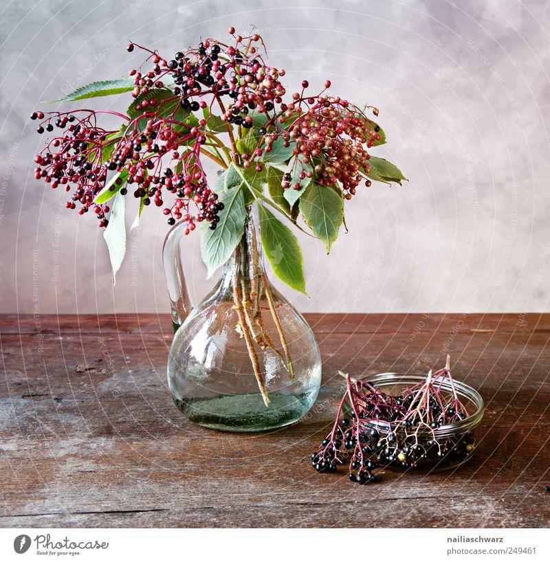 Stilleben mit Holunder alt grün schön Pflanze Holz Glas elegant Frucht ästhetisch frisch Tisch Sträucher Romantik außergewöhnlich violett Gemälde